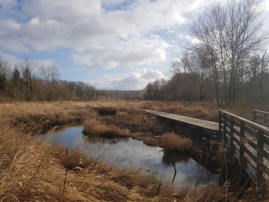 Photo renaturation de cours d'eau